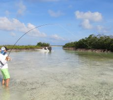 Tom Windham landing a bonefish on Conception Island, Bahamas.